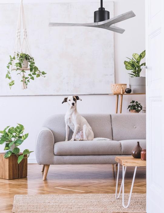 ventilateur plafond avec moteur dc silencieux atlas fan mollywood
